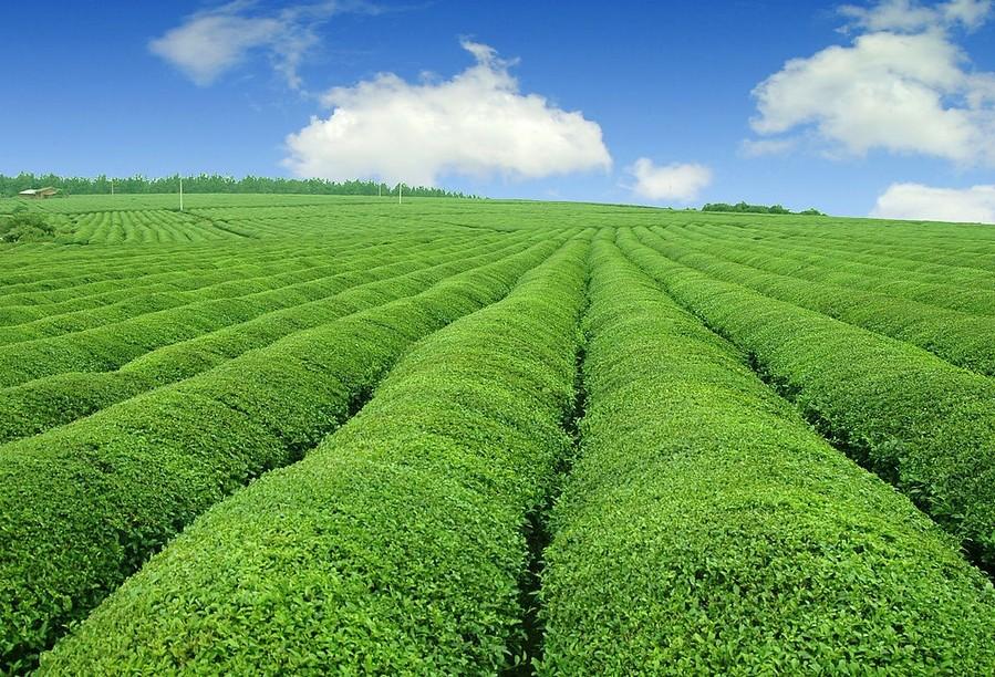 新希望聚力三农发展,希望金融助推乡村振兴